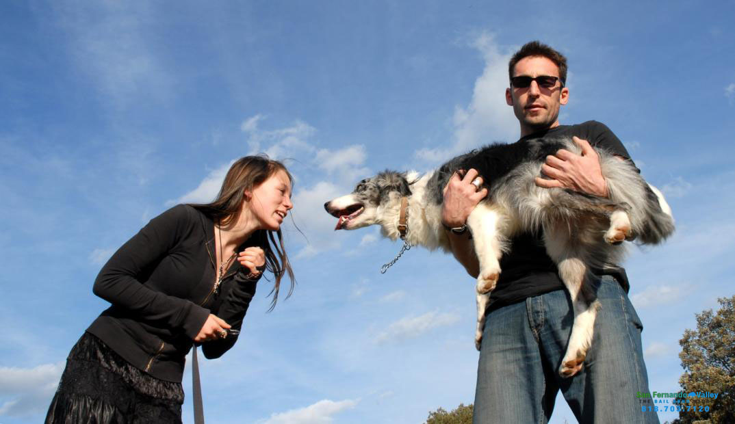 Do You Know What You Are Liable for When It Comes to Your Dog