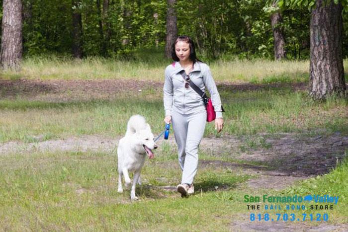 pet safety during summer sylmar bail bonds