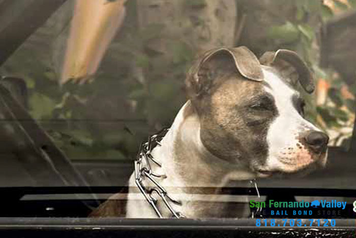 can you leave a dog in cold car san fernando valley bail bonds