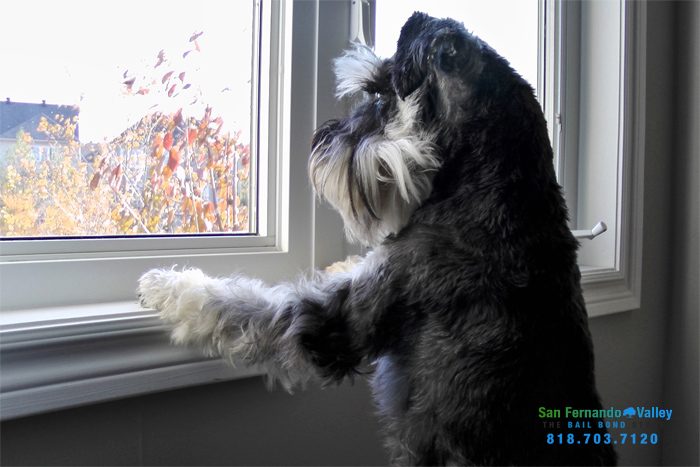 dog barking laws california